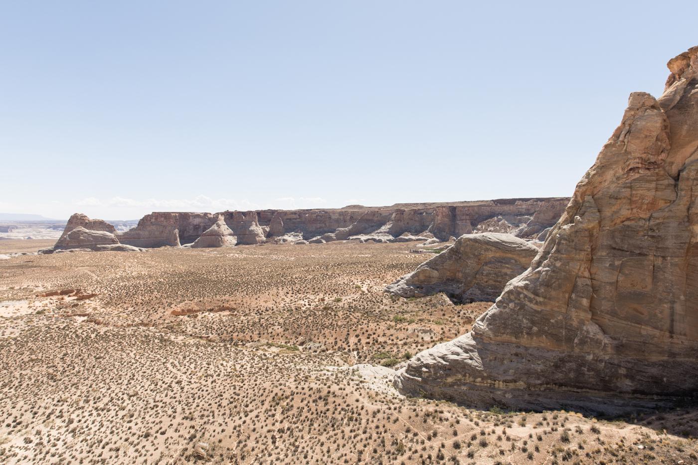 Desert Silver Fox